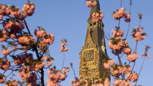 healy hall clock seen through blossoms