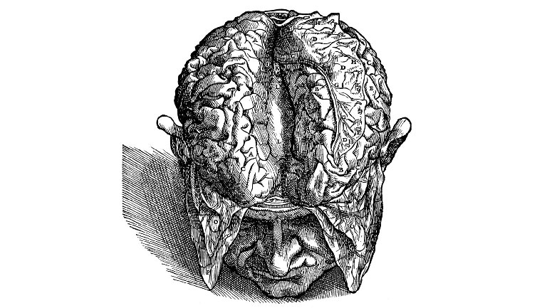 old sketch of a brain revealed from a dude's skull