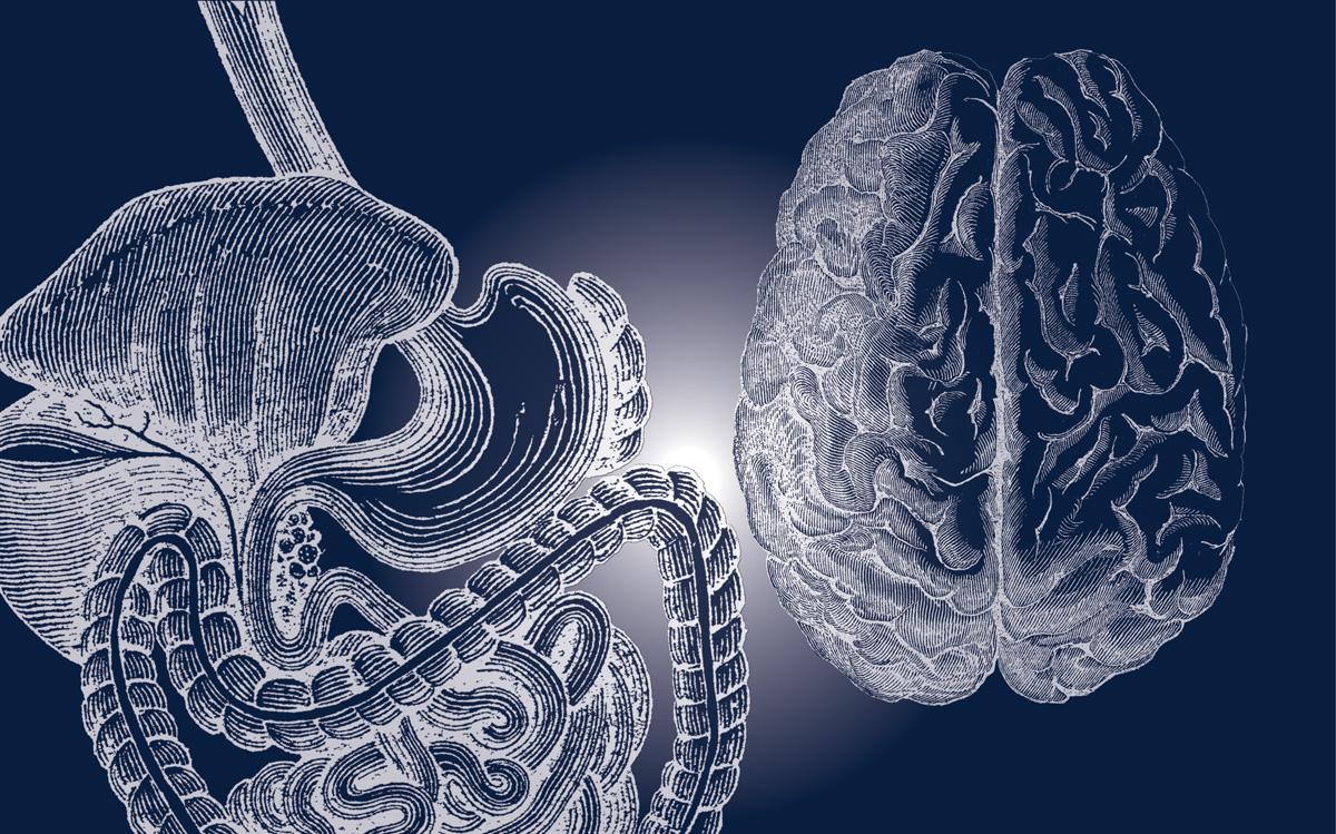 harmony gut. brain crop